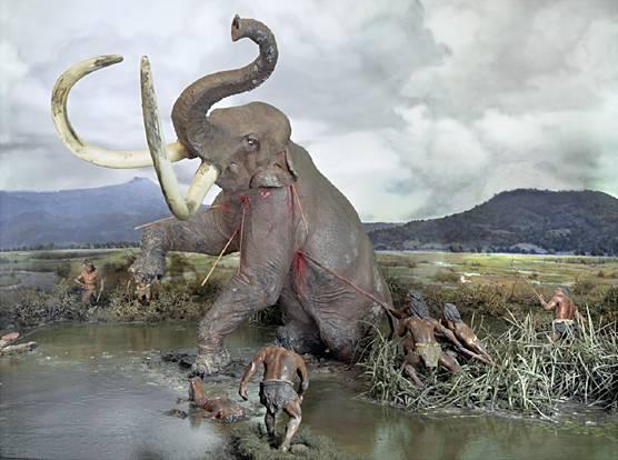 http://www.cerebromente.org.br/n13/mente/evolution/hunting.JPG
